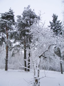 Рождество в русской поэзии